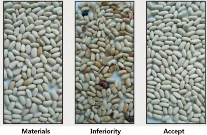 color sorting for white beans