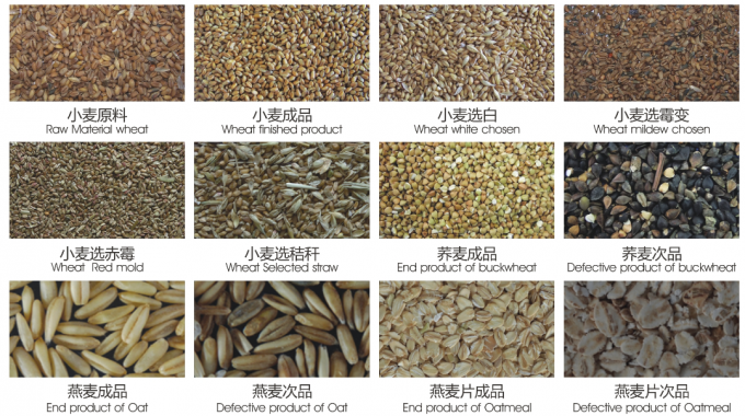 wheat color sorting