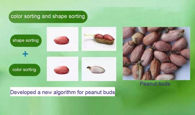 color sorting and shape sorting for peanut
