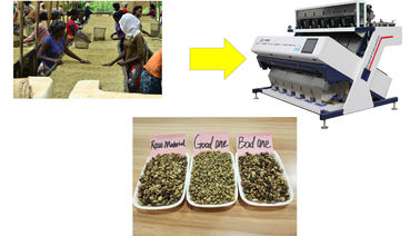 China Arabica coffee sorting,coffee bean color sorter factory
